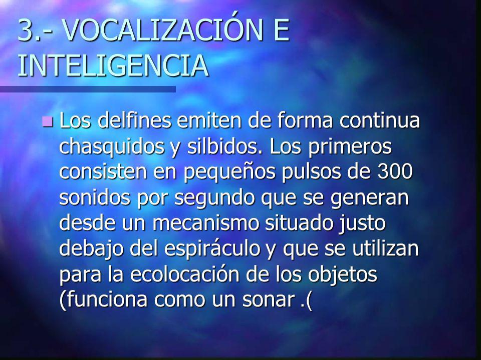 3.- VOCALIZACIÓN E INTELIGENCIA Los delfines emiten de forma continua chasquidos y silbidos.