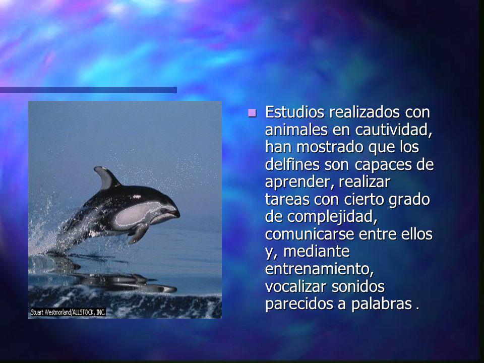 Estudios realizados con animales en cautividad, han mostrado que los delfines son capaces de aprender, realizar tareas con cierto grado de complejidad, comunicarse entre ellos y, mediante entrenamiento, vocalizar sonidos parecidos a palabras.