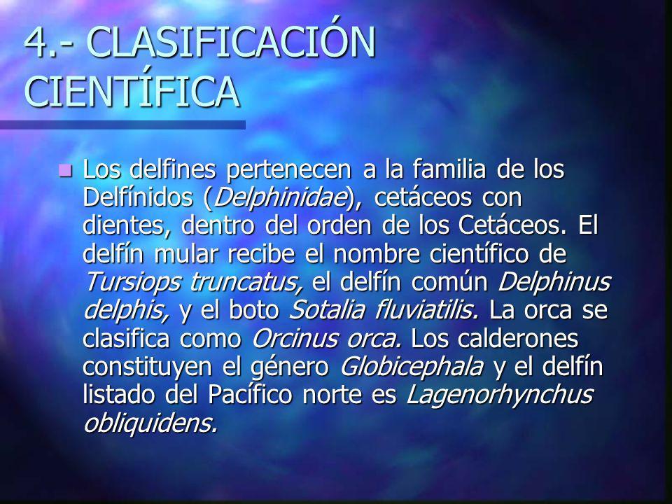4.- CLASIFICACIÓN CIENTÍFICA Los delfines pertenecen a la familia de los Delfínidos (Delphinidae), cetáceos con dientes, dentro del orden de los Cetáceos.