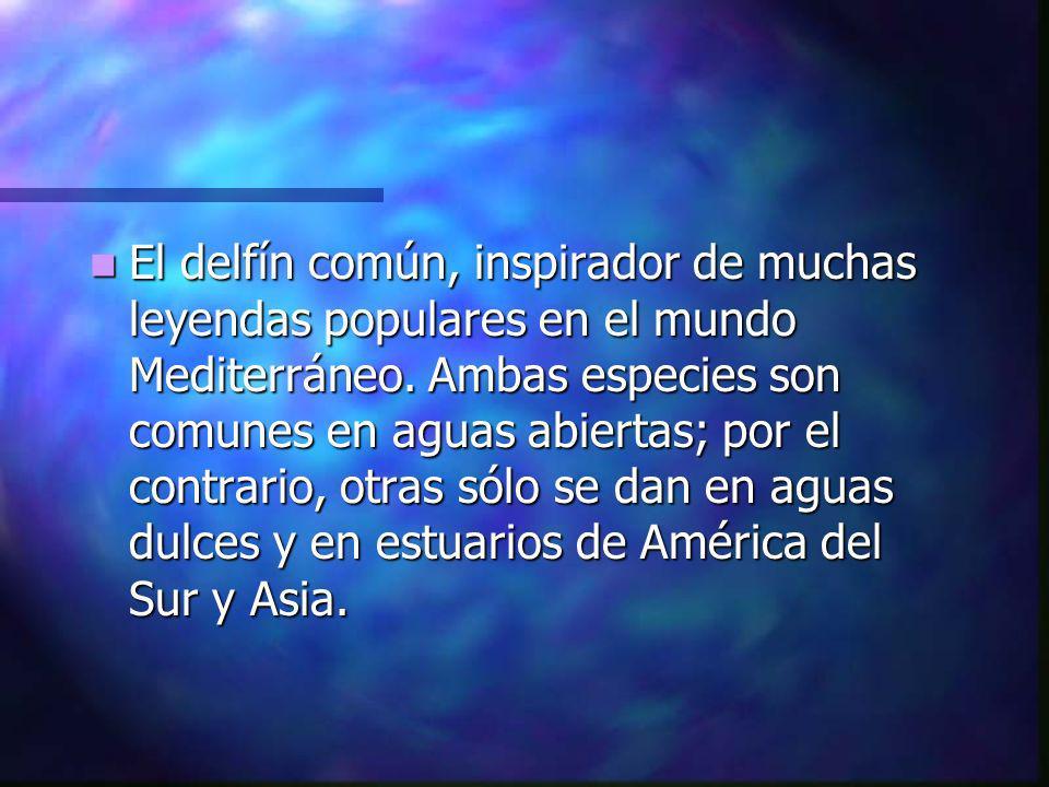El delfín común, inspirador de muchas leyendas populares en el mundo Mediterráneo.