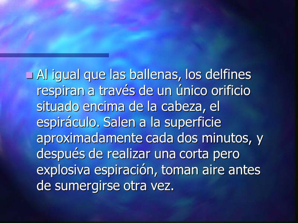 5.- ANATOMIA DEL DELFIN.