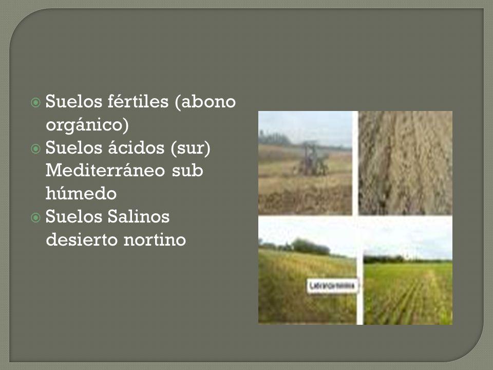 Suelos fértiles (abono orgánico) Suelos ácidos (sur) Mediterráneo sub húmedo Suelos Salinos desierto nortino