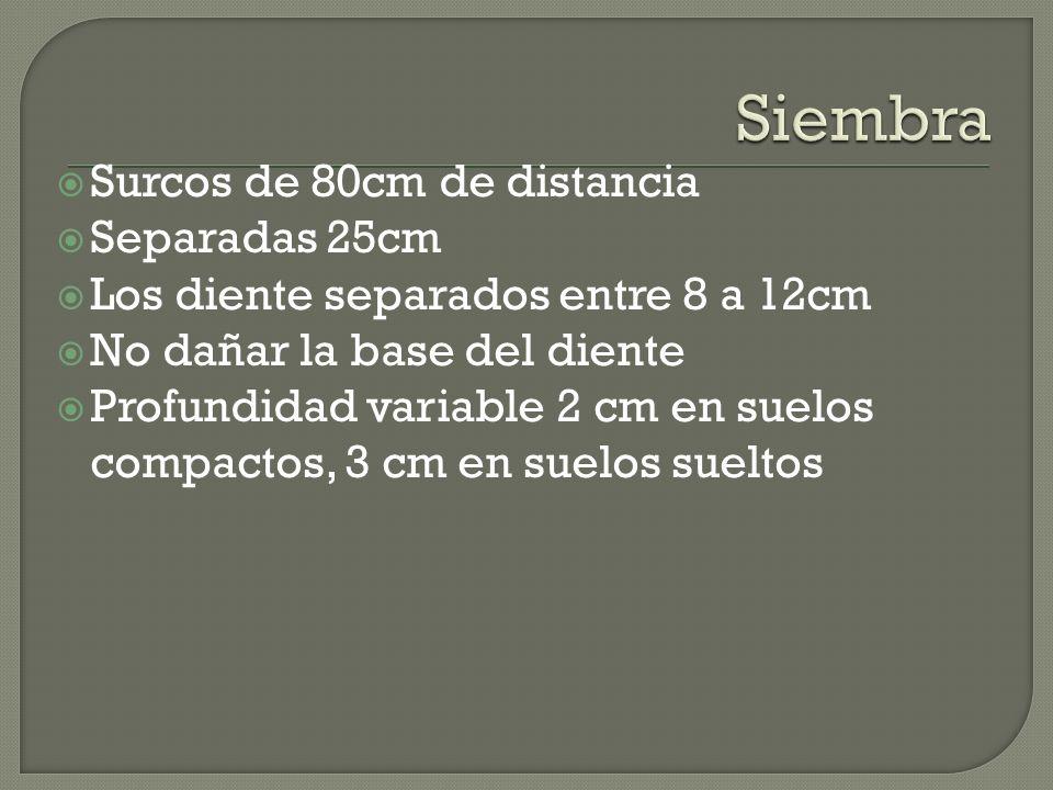 Surcos de 80cm de distancia Separadas 25cm Los diente separados entre 8 a 12cm No dañar la base del diente Profundidad variable 2 cm en suelos compactos, 3 cm en suelos sueltos
