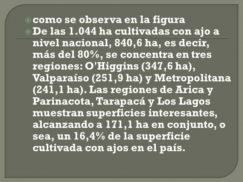 como se observa en la figura De las 1.044 ha cultivadas con ajo a nivel nacional, 840,6 ha, es decir, más del 80%, se concentra en tres regiones: O Higgins (347,6 ha), Valparaíso (251,9 ha) y Metropolitana (241,1 ha).