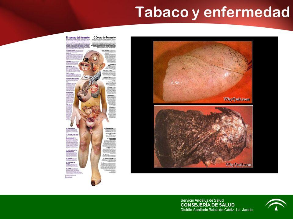 Tabaco y enfermedad Servicio Andaluz de Salud CONSEJERÍA DE SALUD Distrito Sanitario Bahía de Cádiz – -La Janda