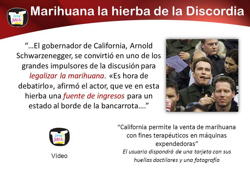Marihuana la hierba de la Discordia …El gobernador de California, Arnold Schwarzenegger, se convirtió en uno de los grandes impulsores de la discusión para legalizar la marihuana.