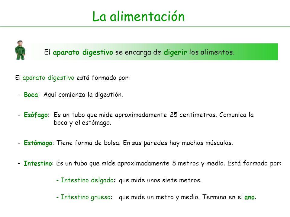 Boca Esófago Intestino delgado Estómago Intestino grueso Ano Aparato digestivo Aparato digestivo
