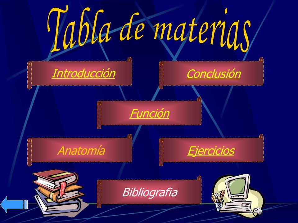Anatomía Introducción Función Conclusión Bibliografia Ejercicios