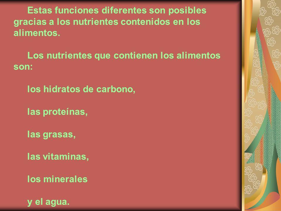 Estas funciones diferentes son posibles gracias a los nutrientes contenidos en los alimentos. Los nutrientes que contienen los alimentos son: los hidr