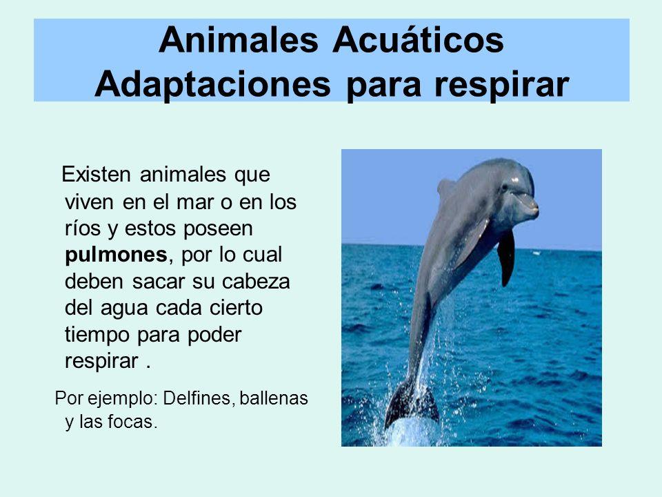 Existen animales que viven en el mar o en los ríos y estos poseen pulmones, por lo cual deben sacar su cabeza del agua cada cierto tiempo para poder r