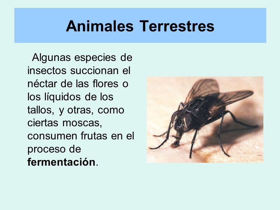 Algunas especies de insectos succionan el néctar de las flores o los líquidos de los tallos, y otras, como ciertas moscas, consumen frutas en el proce
