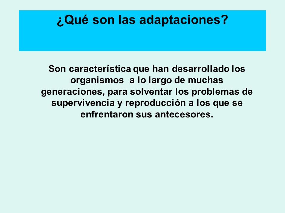 ¿Qué son las adaptaciones? Son característica que han desarrollado los organismos a lo largo de muchas generaciones, para solventar los problemas de s