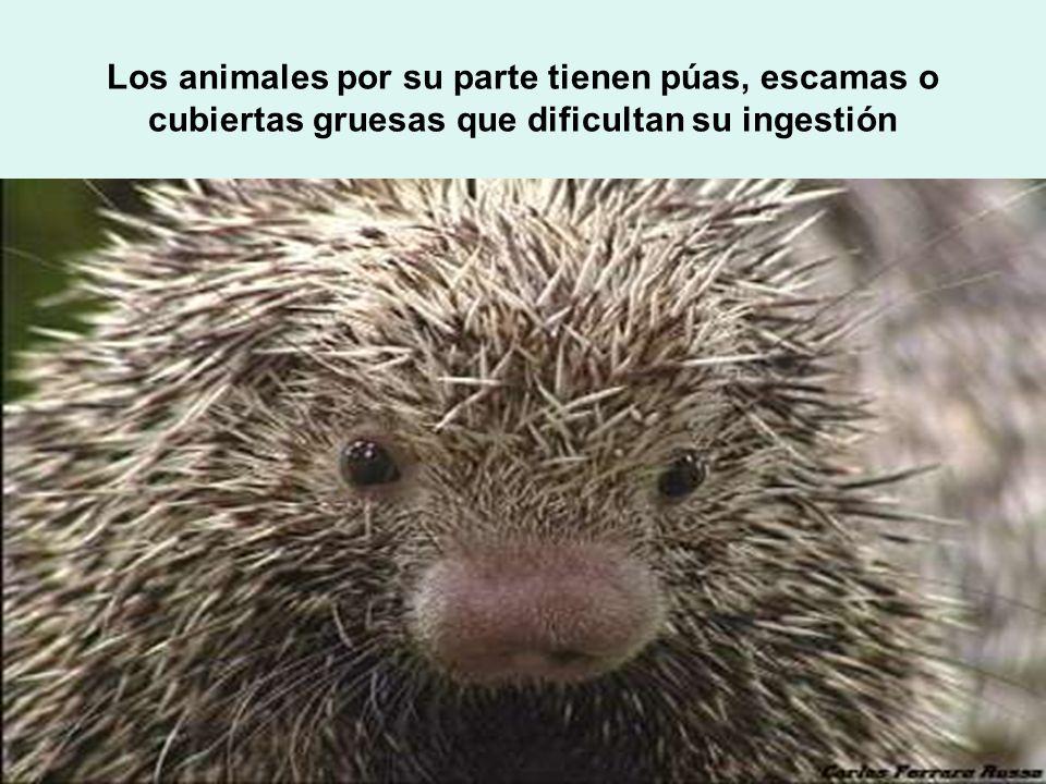Los animales por su parte tienen púas, escamas o cubiertas gruesas que dificultan su ingestión