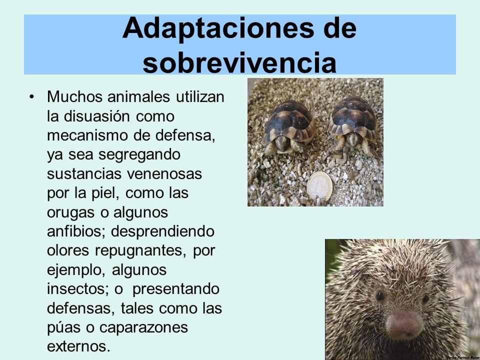 Adaptaciones de sobrevivencia Muchos animales utilizan la disuasión como mecanismo de defensa, ya sea segregando sustancias venenosas por la piel, com