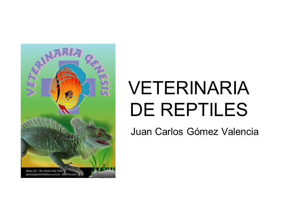 GENERALIDADES Son muchas las efermedades y lesiones de diversos orígenes que pueden afectar a los reptiles.