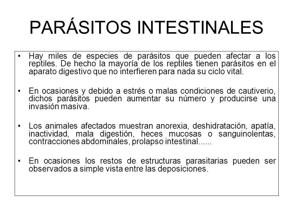 PARÁSITOS INTESTINALES Hay miles de especies de parásitos que pueden afectar a los reptiles. De hecho la mayoría de los reptiles tienen parásitos en e