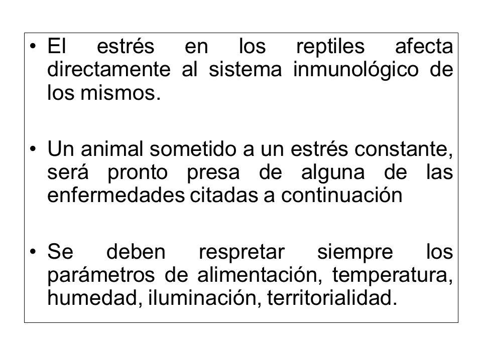 El estrés en los reptiles afecta directamente al sistema inmunológico de los mismos. Un animal sometido a un estrés constante, será pronto presa de al