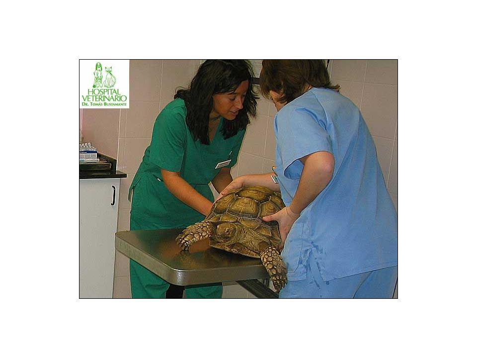 ESTOMATITIS En muchas ocasiones nuestros reptiles pueden sufrir heridas en la boca producidas por mordeduras de presas, dientes caidos, etc.