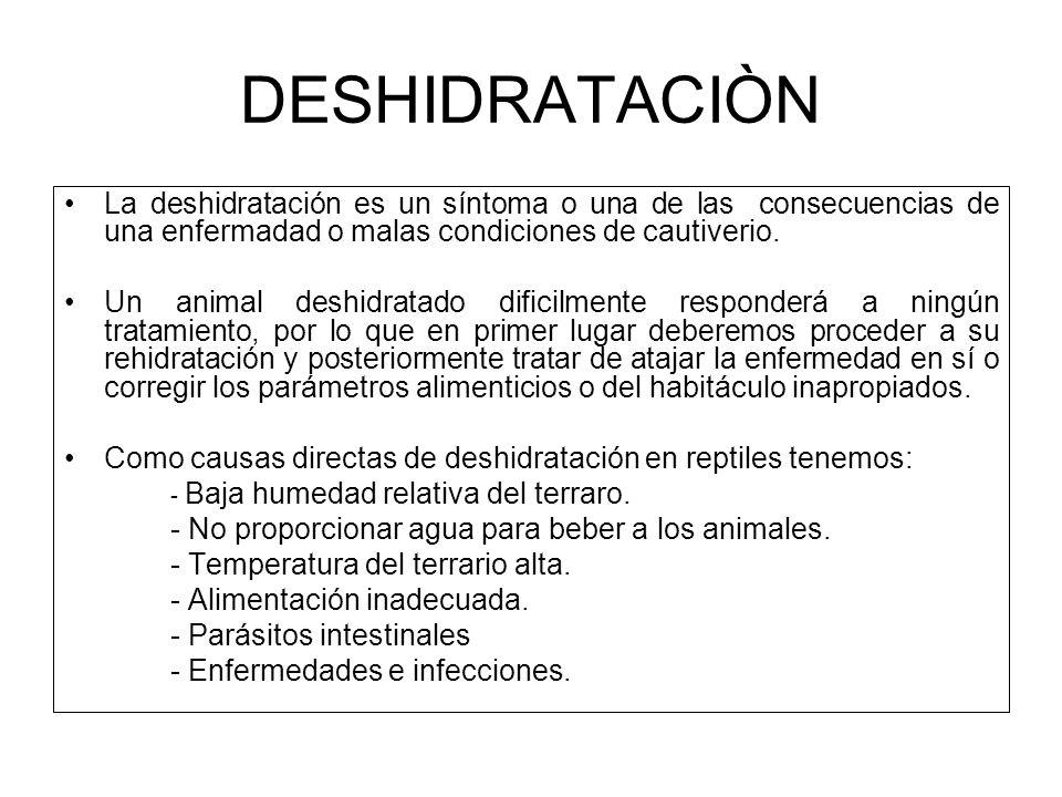 DESHIDRATACIÒN La deshidratación es un síntoma o una de las consecuencias de una enfermadad o malas condiciones de cautiverio. Un animal deshidratado