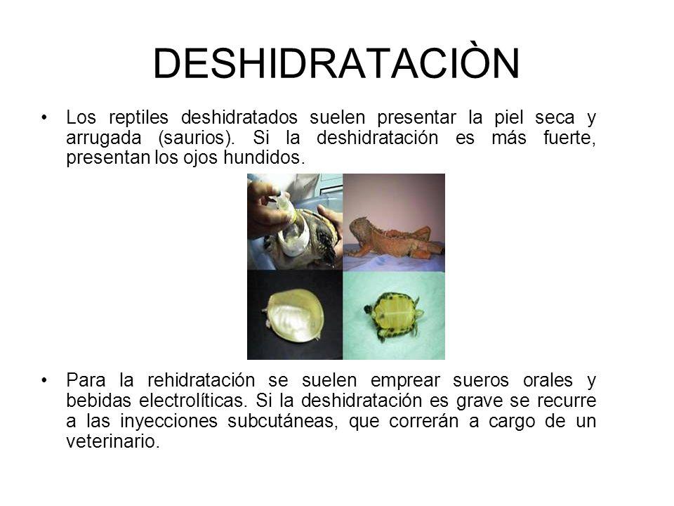 DESHIDRATACIÒN Los reptiles deshidratados suelen presentar la piel seca y arrugada (saurios). Si la deshidratación es más fuerte, presentan los ojos h