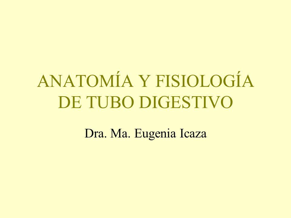 ANATOMÍA Y FISIOLOGÍA DE TUBO DIGESTIVO Dra. Ma. Eugenia Icaza