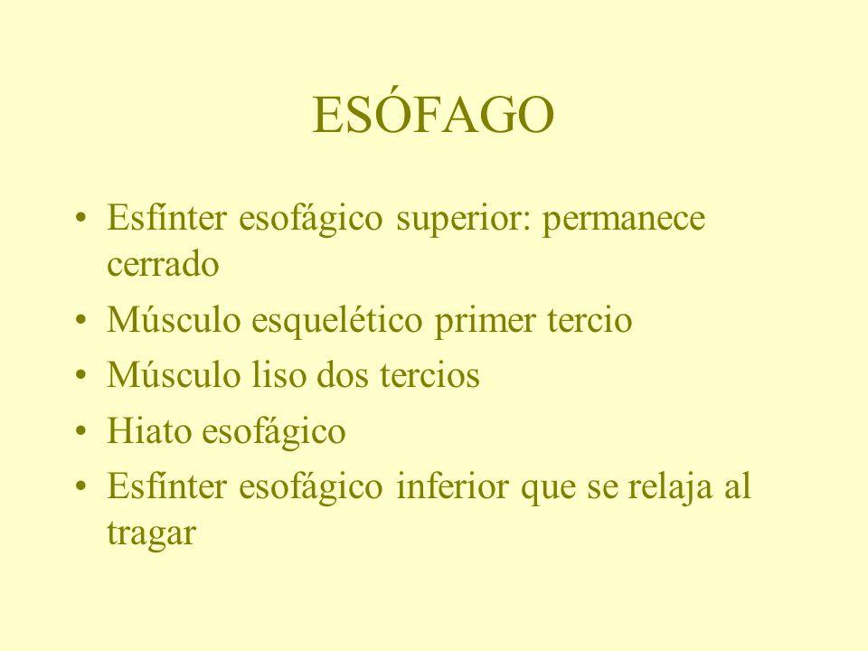 ESÓFAGO Esfínter esofágico superior: permanece cerrado Músculo esquelético primer tercio Músculo liso dos tercios Hiato esofágico Esfínter esofágico i