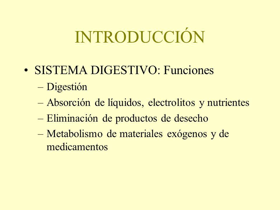 INTRODUCCIÓN SISTEMA DIGESTIVO: Funciones –Digestión –Absorción de líquidos, electrolitos y nutrientes –Eliminación de productos de desecho –Metabolis
