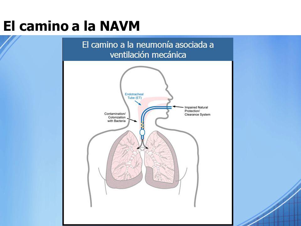 El camino a la NAVM El camino a la neumonía asociada a ventilación mecánica