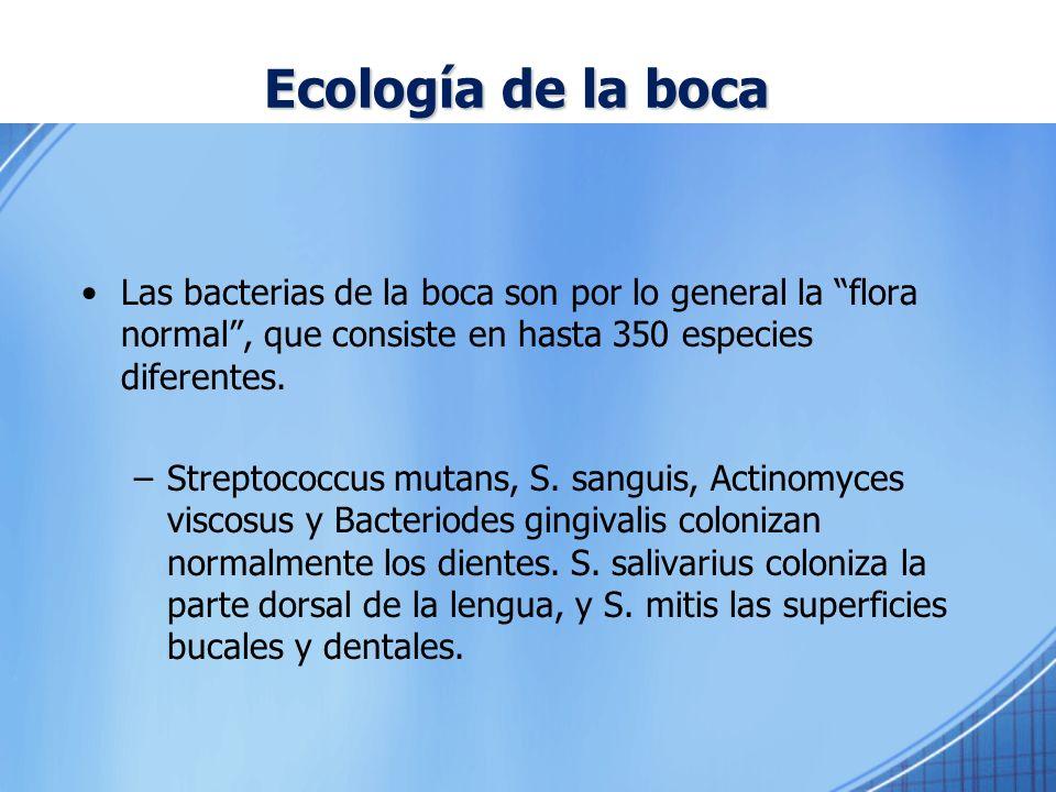Ecología de la boca Las bacterias de la boca son por lo general la flora normal, que consiste en hasta 350 especies diferentes. –Streptococcus mutans,