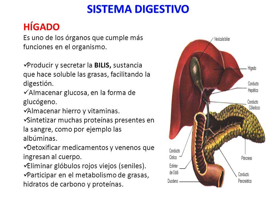 HÍGADO Es uno de los órganos que cumple más funciones en el organismo. Producir y secretar la BILIS, sustancia que hace soluble las grasas, facilitand