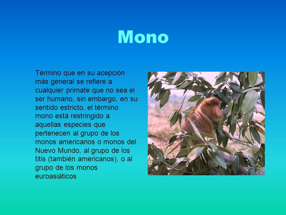 Mono Término que en su acepción más general se refiere a cualquier primate que no sea el ser humano; sin embargo, en su sentido estricto, el término mono está restringido a aquellas especies que pertenecen al grupo de los monos americanos o monos del Nuevo Mundo, al grupo de los titis (también americanos), o al grupo de los monos euroasiáticos