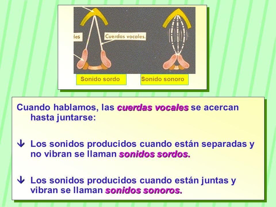 cuerdas vocales Cuando hablamos, las cuerdas vocales se acercan hasta juntarse: sonidos sordos. Los sonidos producidos cuando están separadas y no vib