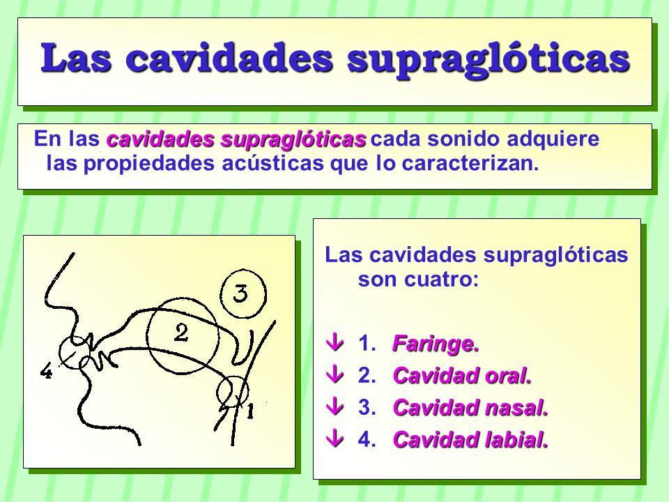 Las cavidades supraglóticas son cuatro: Faringe. 1.Faringe. Cavidad oral. 2.Cavidad oral. Cavidad nasal. 3.Cavidad nasal. Cavidad labial. 4.Cavidad la