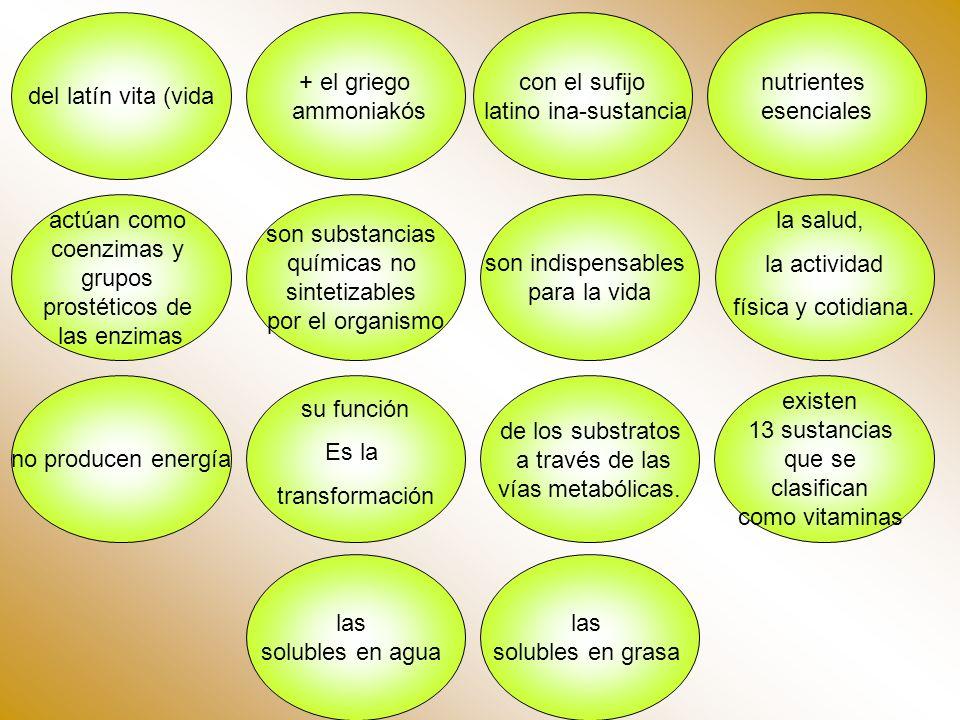 nutrientes esenciales de los substratos a través de las vías metabólicas. actúan como coenzimas y grupos prostéticos de las enzimas del latín vita (vi
