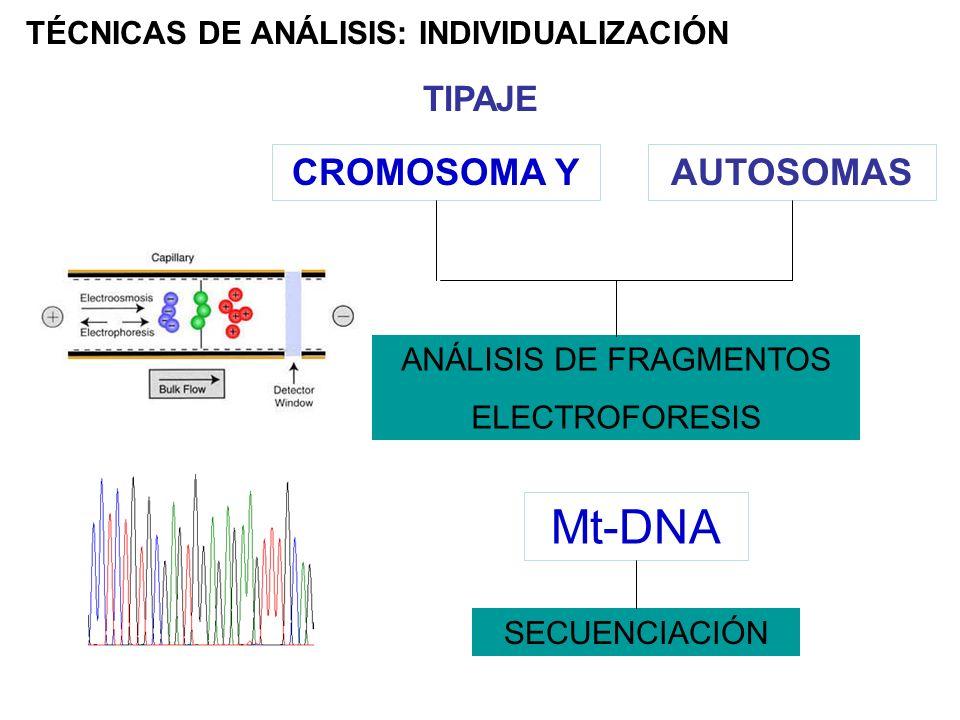 TÉCNICAS DE ANÁLISIS: INDIVIDUALIZACIÓN TIPAJE CROMOSOMA YAUTOSOMAS ANÁLISIS DE FRAGMENTOS ELECTROFORESIS Mt-DNA SECUENCIACIÓN
