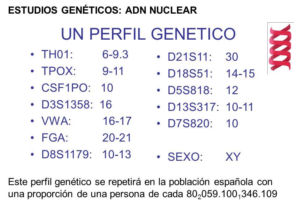 TH01: 6-9.3 TPOX: 9-11 CSF1PO: 10 D3S1358: 16 VWA: 16-17 FGA: 20-21 D8S1179: 10-13 D21S11: 30 D18S51: 14-15 D5S818: 12 D13S317: 10-11 D7S820: 10 SEXO: XY Este perfil genético se repetirá en la población española con una proporción de una persona de cada 80 2 059.100 1 346.109 UN PERFIL GENETICO ESTUDIOS GENÉTICOS: ADN NUCLEAR