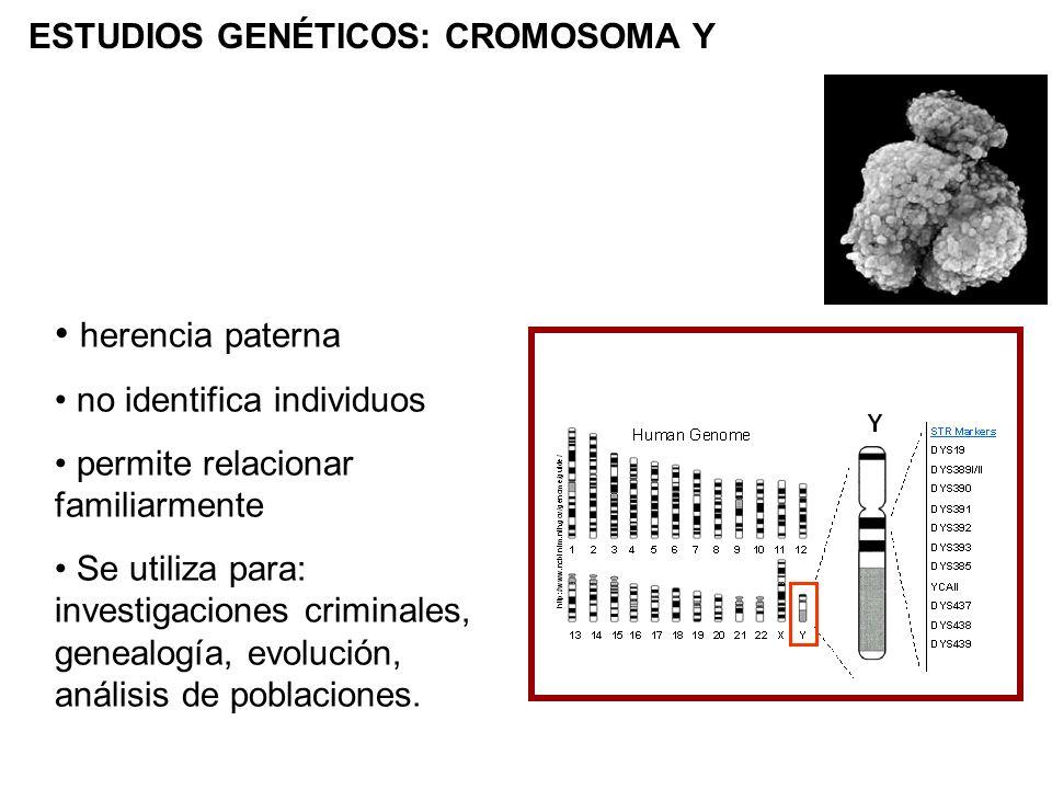 ESTUDIOS GENÉTICOS: CROMOSOMA Y herencia paterna no identifica individuos permite relacionar familiarmente Se utiliza para: investigaciones criminales