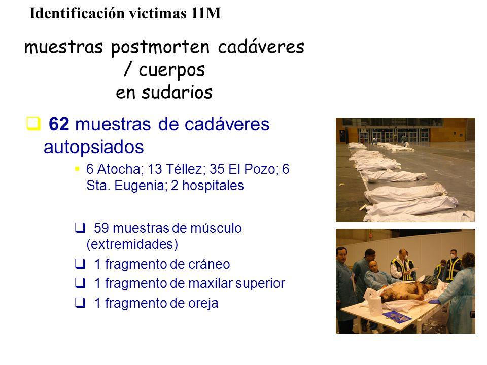muestras postmorten cadáveres / cuerpos en sudarios 62 muestras de cadáveres autopsiados 6 Atocha; 13 Téllez; 35 El Pozo; 6 Sta. Eugenia; 2 hospitales