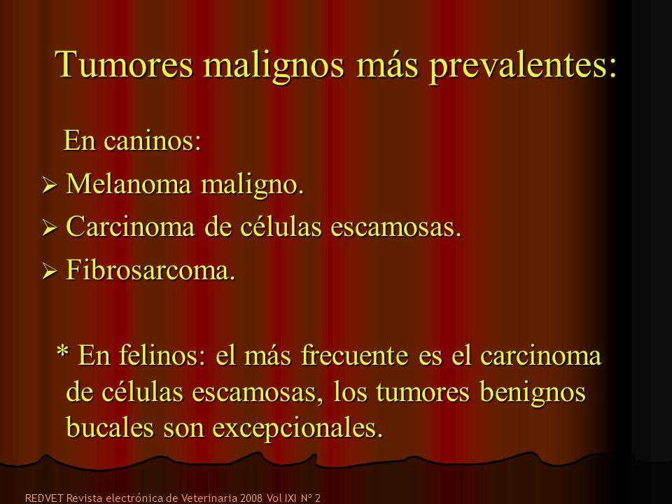 Tumores malignos más prevalentes: En caninos: En caninos: Melanoma maligno. Melanoma maligno. Carcinoma de células escamosas. Carcinoma de células esc