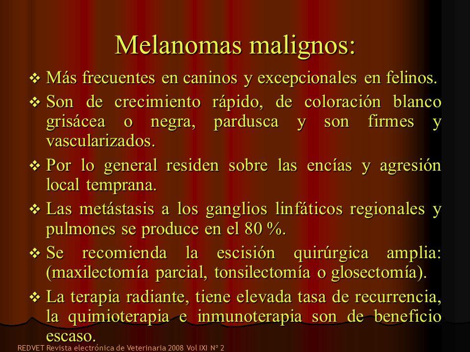 Melanomas malignos: Más frecuentes en caninos y excepcionales en felinos. Más frecuentes en caninos y excepcionales en felinos. Son de crecimiento ráp