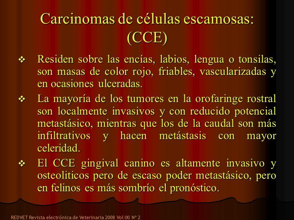 Carcinomas de células escamosas: (CCE) Residen sobre las encías, labios, lengua o tonsilas, son masas de color rojo, friables, vascularizadas y en ocasiones ulceradas.