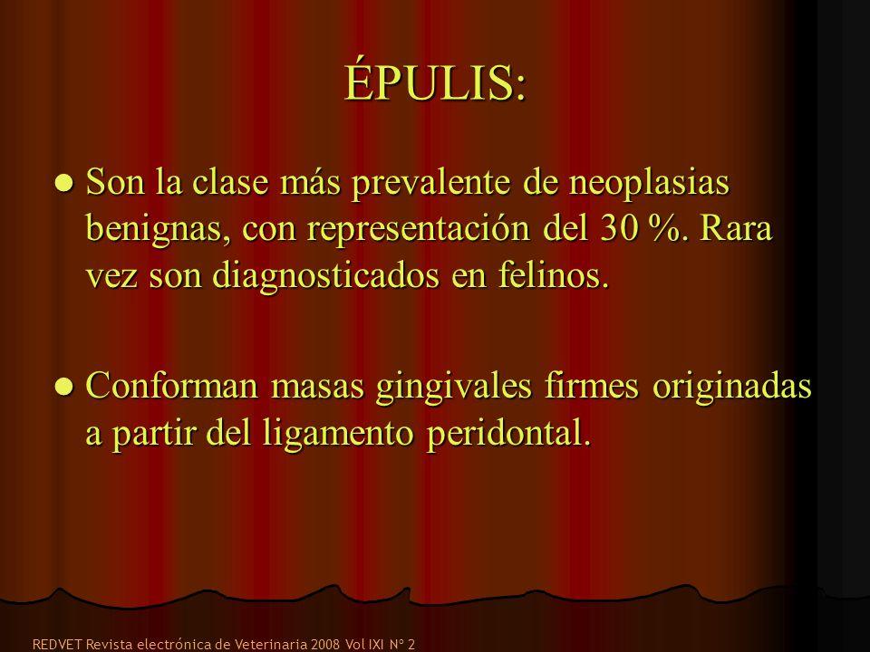 ÉPULIS: Son la clase más prevalente de neoplasias benignas, con representación del 30 %. Rara vez son diagnosticados en felinos. Son la clase más prev