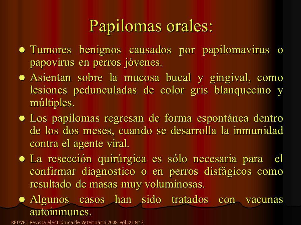 Papilomas orales: Tumores benignos causados por papilomavirus o papovirus en perros jóvenes. Tumores benignos causados por papilomavirus o papovirus e