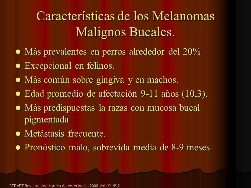 Características de los Melanomas Malignos Bucales. Más prevalentes en perros alrededor del 20%. Más prevalentes en perros alrededor del 20%. Excepcion