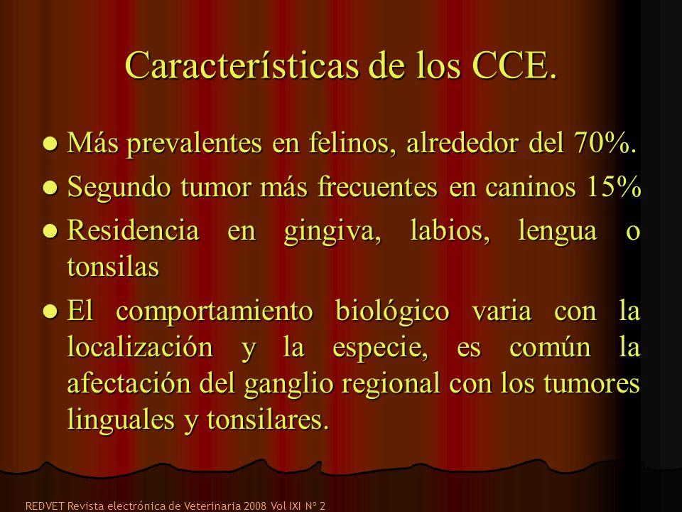 Características de los CCE. Más prevalentes en felinos, alrededor del 70%. Más prevalentes en felinos, alrededor del 70%. Segundo tumor más frecuentes