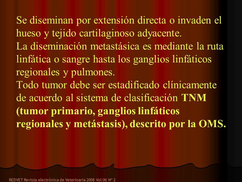 Se diseminan por extensión directa o invaden el hueso y tejido cartilaginoso adyacente. La diseminación metastásica es mediante la ruta linfática o sa