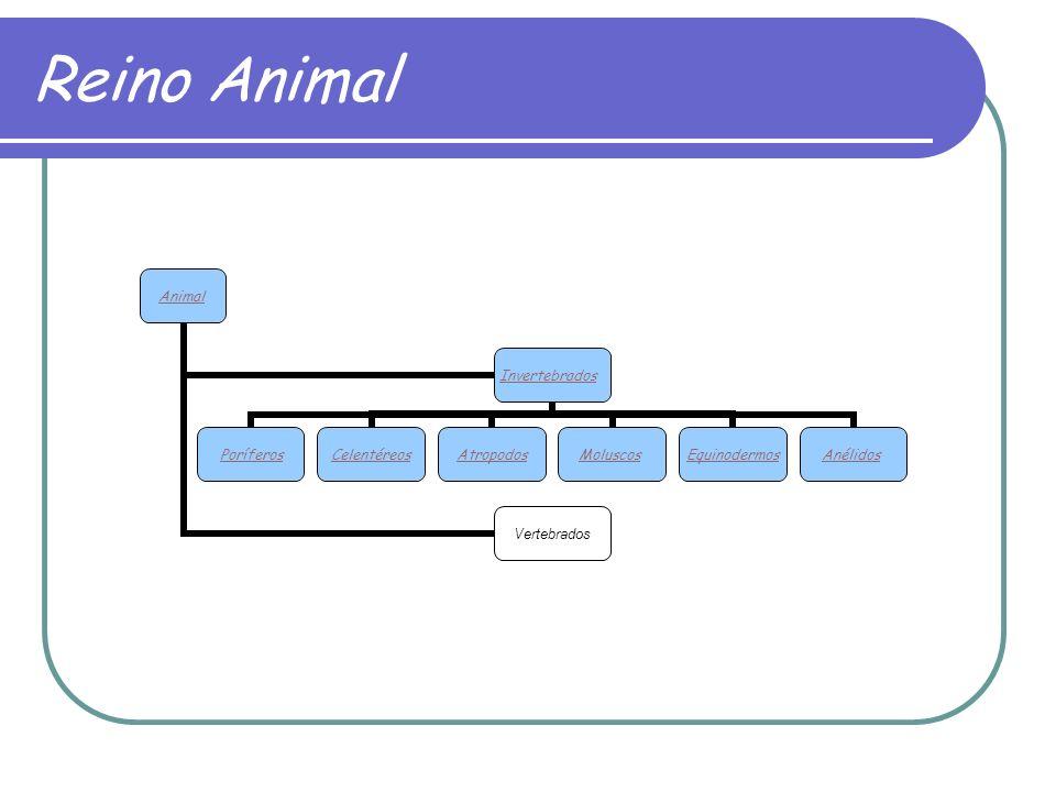 Reino Animal Animal Invertebrados PoríferosCelentéreosAtropodosMoluscosEquinodermosAnélidos Vertebrados