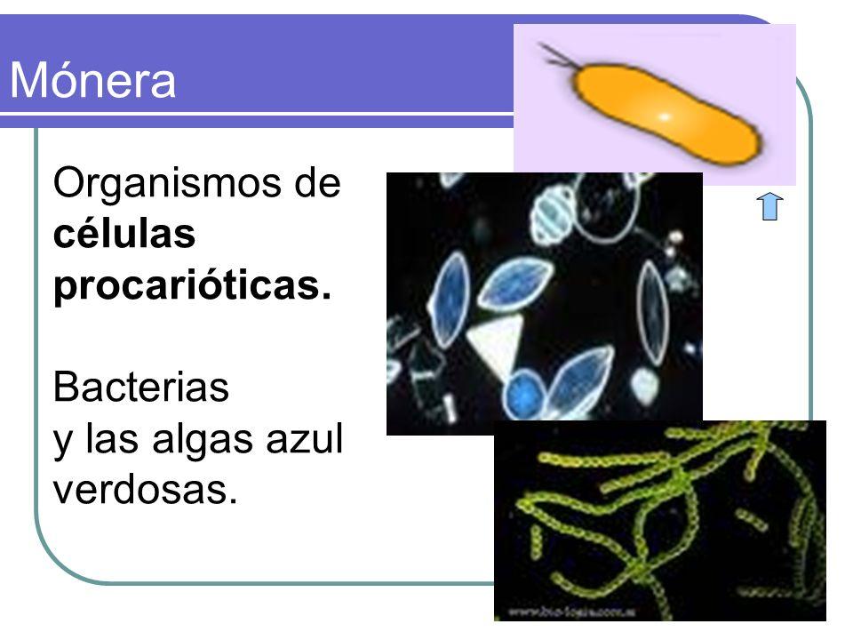 Protista Organismos unicelulares de células eucarióticas. algas doradas, protozoarios.