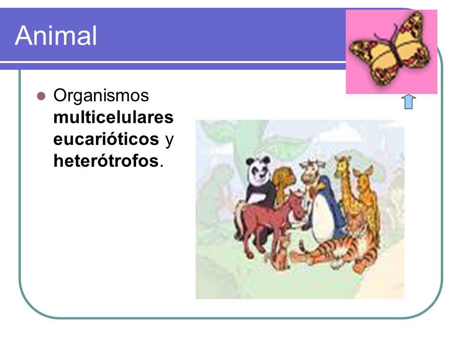 REPTILES Características generales de los reptiles 1.- Son vertebrados terrestres, con el cuerpo generalmente cubierto de escamas.