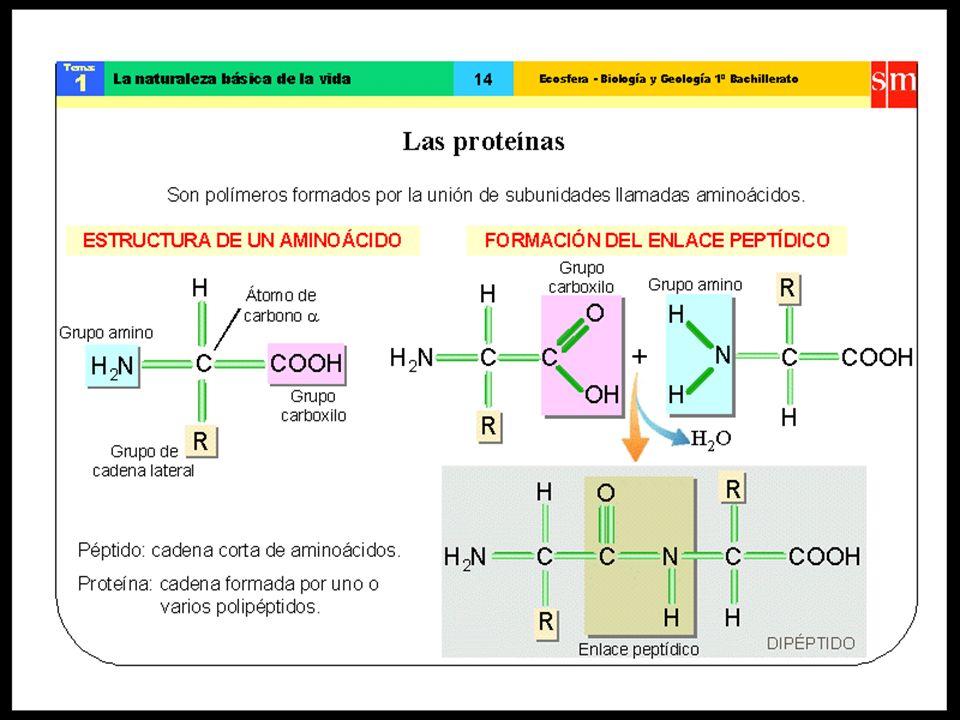 Composición de la sangre L as proteínas son el segundo constituyente en abundancia del plasma, con un valor de referencia del 7%.